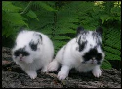 sweet baby rabbits with ferns behind on a log
