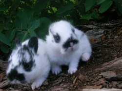 Super Cute Baby Bunnies Picture